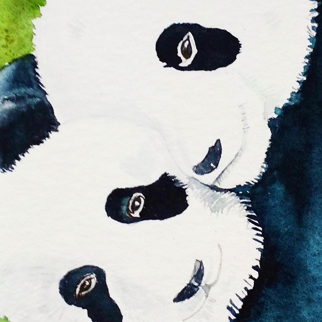 Tendresse de Panda