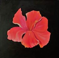 Une Hibiscus de Hawaii